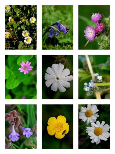 montage fleurs.png
