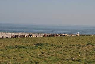 moutons dans le pré Nord