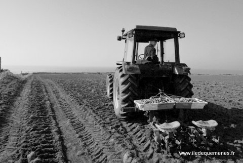 patates,tracteur,ferme,quemenes,île